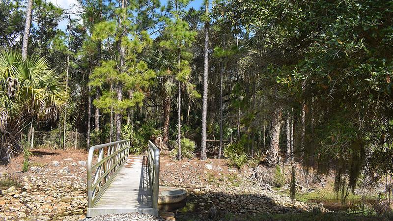 Bridge in Orlando Wetlands