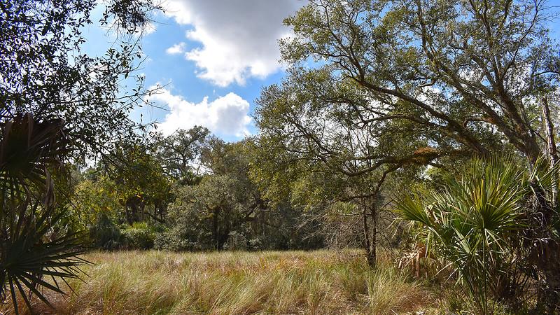 Grassy wetlands