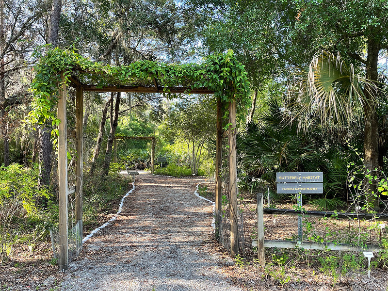 vine covered archway at Camp Bayou