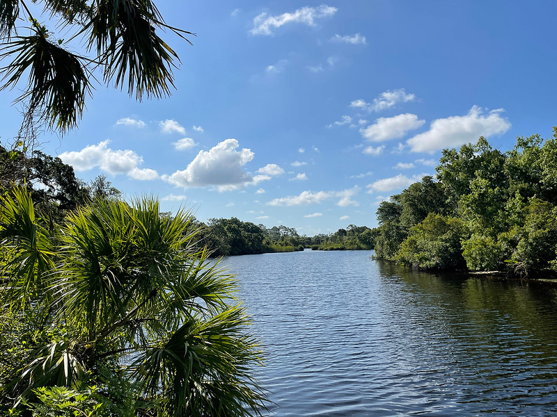 Florida river edged with tropical vegetation