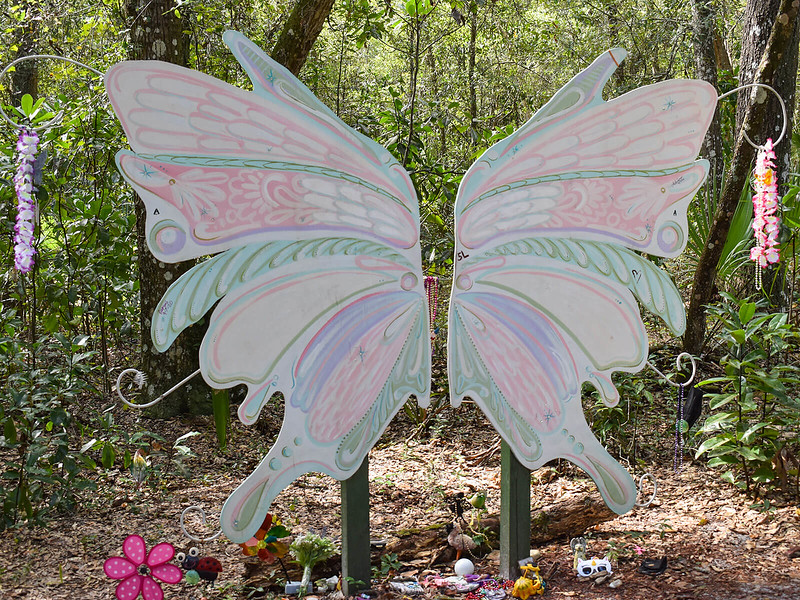 Fairy wings in the woods