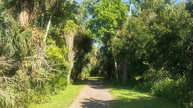 Paved path leading into shady forest