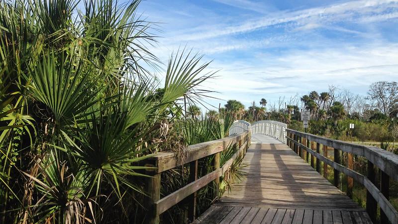 Bridge with palm fronds