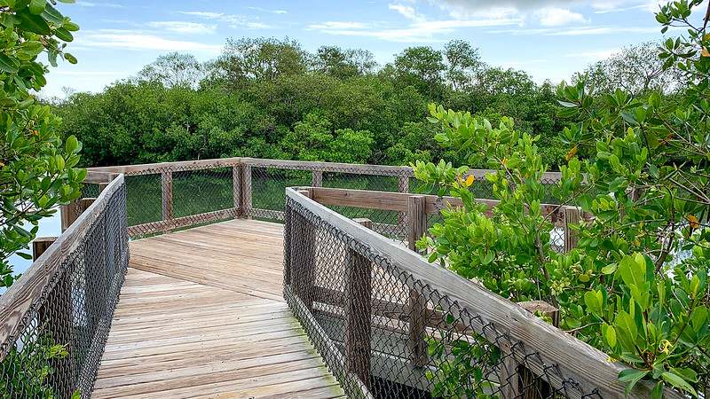 observation deck in mangroves