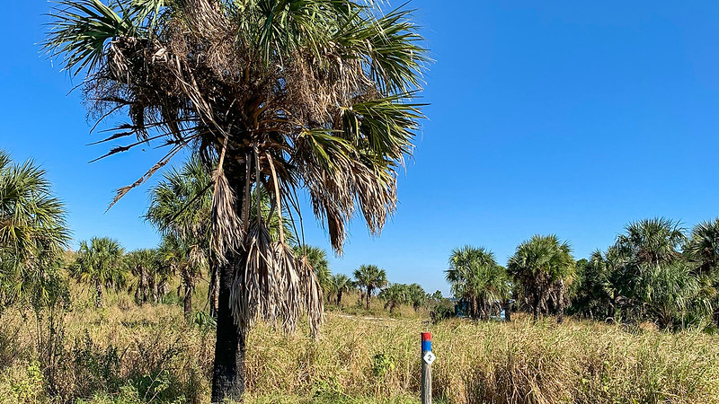 Cabbage palm adjoined by post with 2 on it