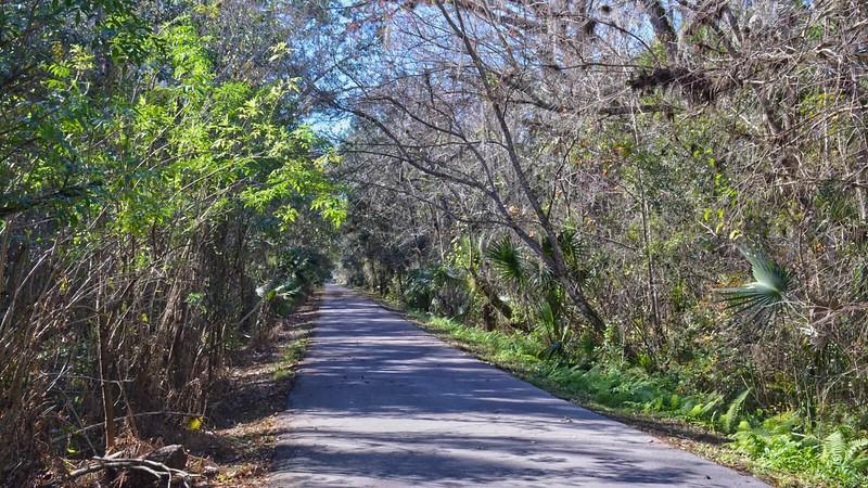 Bike path under tree canopy