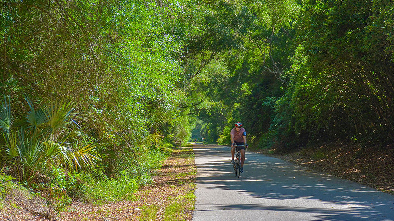 Cyclist on paved path in Florida forest