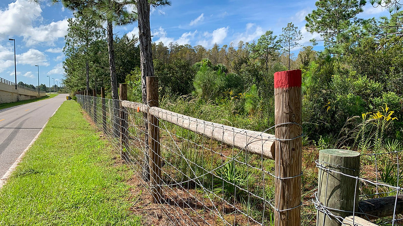 Red blaze on fence post next to road