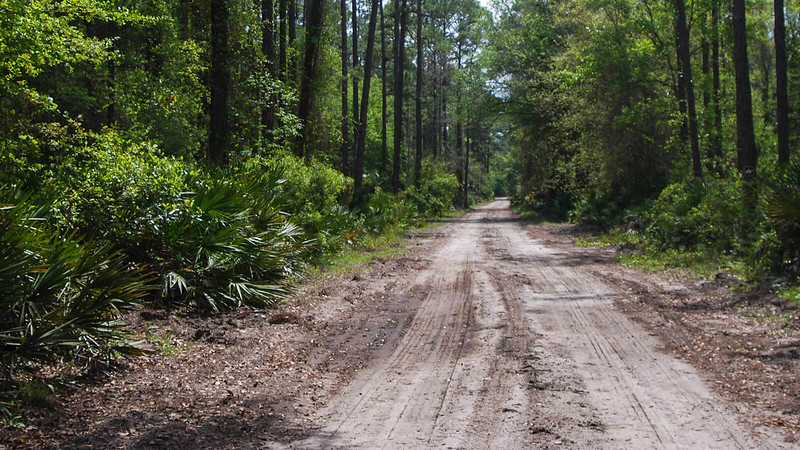 Graded dirt road in forest