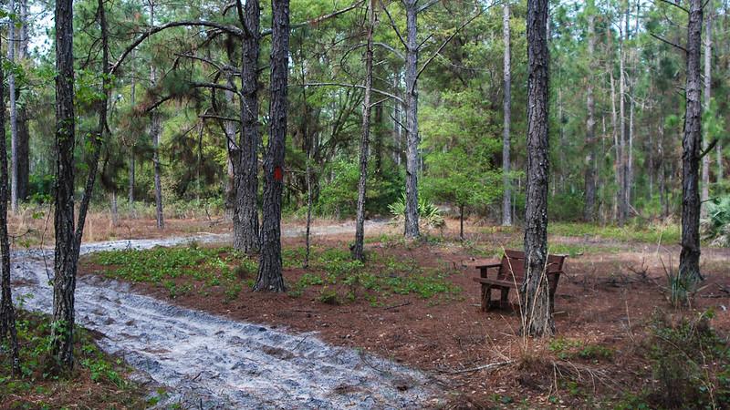 Bench near orange blazed tree