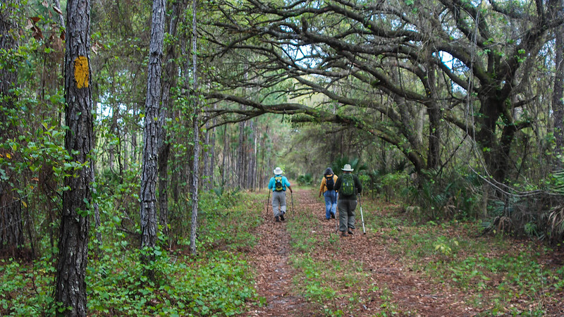 Three hikers on a shaded forest road