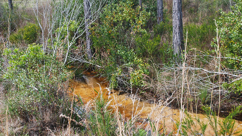 Clear tannic creek with sand bottom