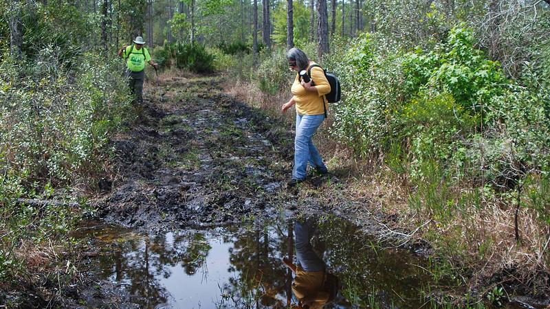 Hikers picking their way through mud