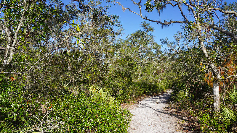 Sand trail in scrub forest