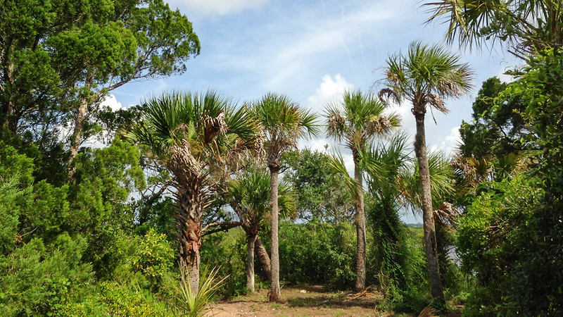 Palms and Cedars