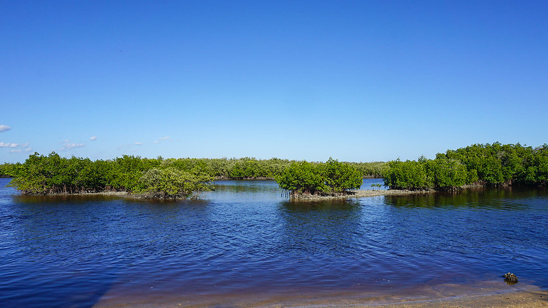 Mangroves and blue water