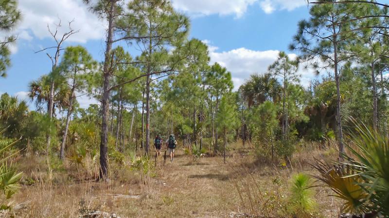 Hikers between pines
