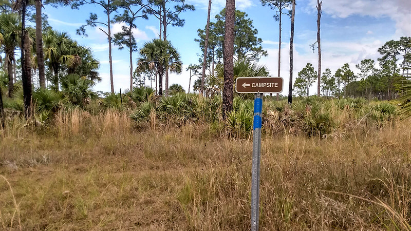 Double blazed blue post with Campsite sign in pine forest