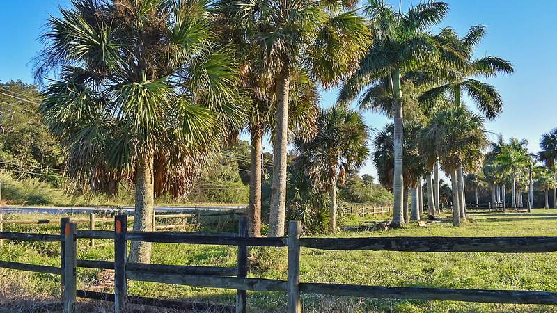 Orange blazes on a fence with palms beyond