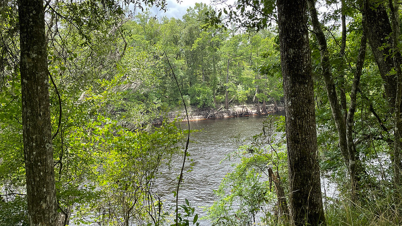 River view between trees