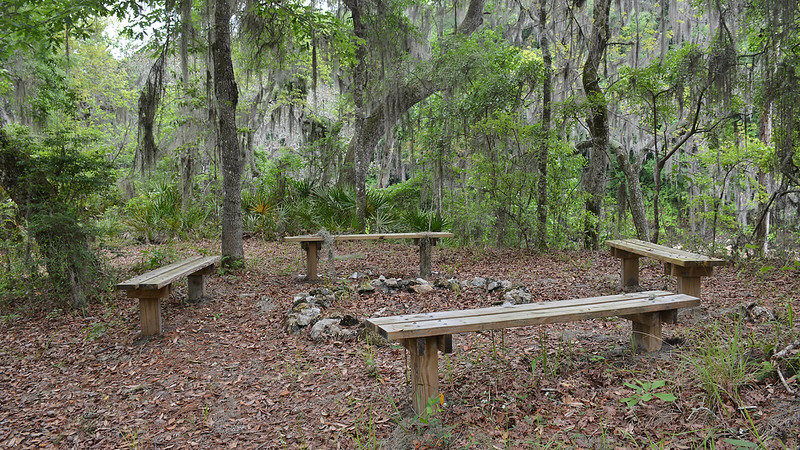 Benches around a stone fire ring under trees