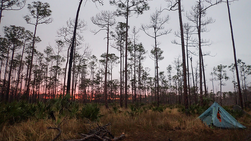 Tent with sunset in pine forest in swamp