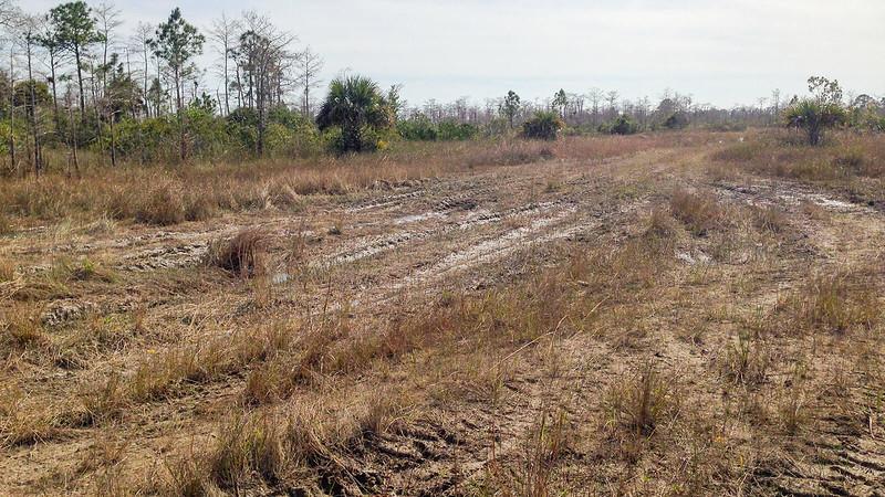 Deep tracks in deep mud