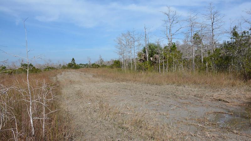Muddy tracks in muddy road