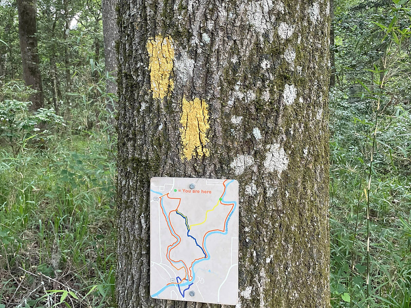 Trail junction with yellow blazes and map