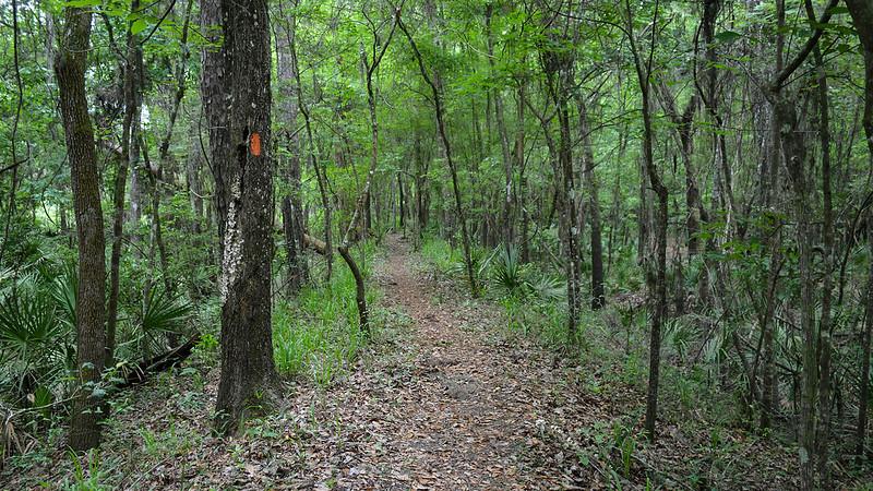 Orange blaze next to ribbon of trail in woods