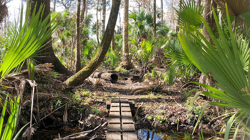 Wooden bridges surrounded by palms