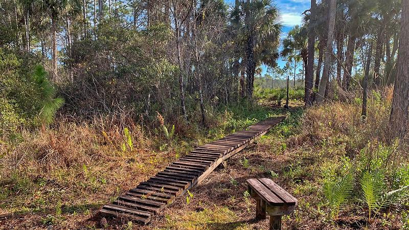 Wooden walkway through marsh beyond bench