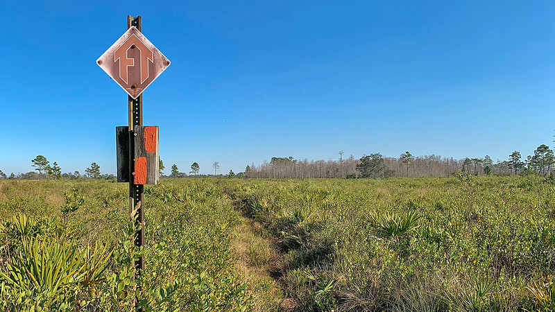 Distant line of cypress beyond FT sign in low scrub