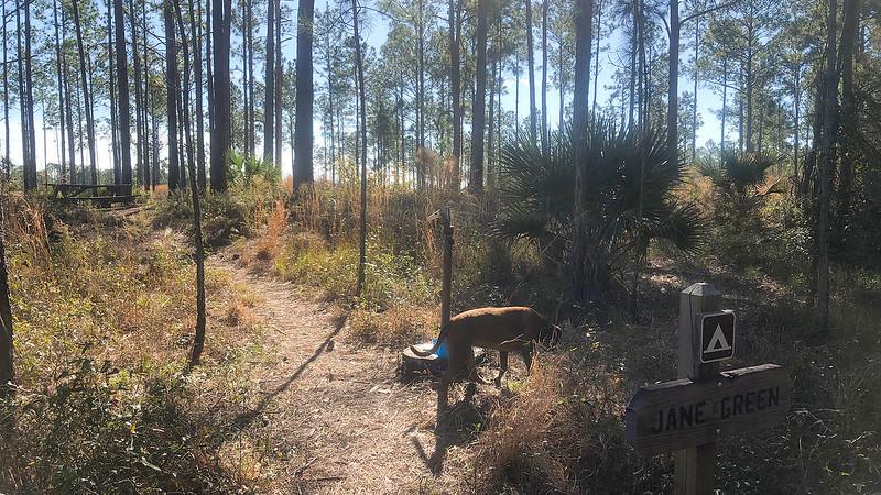 Dog sniffing around water pump at campsite