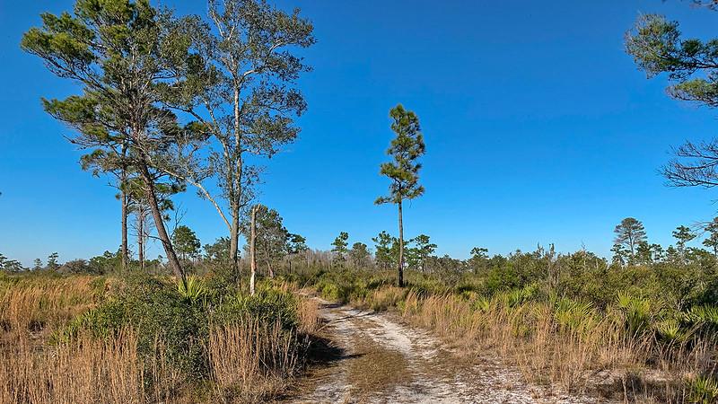 Sand pines in open prairie