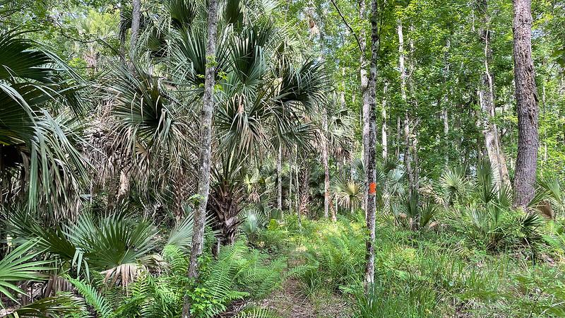 Hamac palmiers chou