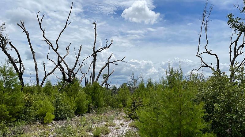 forêt de broussailles et hamac
