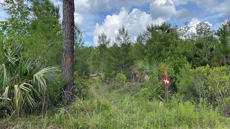 Sentier de pins flambés