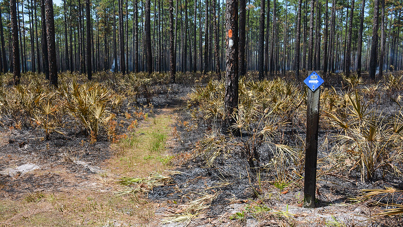 Loop A sign in a forest that is on fire