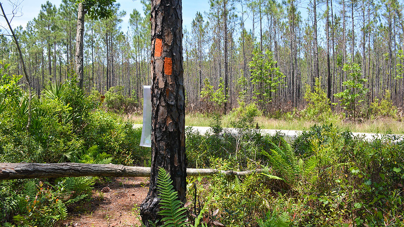 Orange blaze and paper map on tree near forest road
