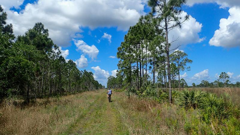 Sandra riding grassy road under pines