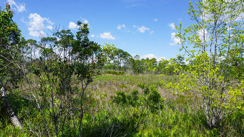 Basin marsh with ferns and grasses