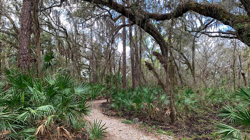 Gravel path under the oak canopy