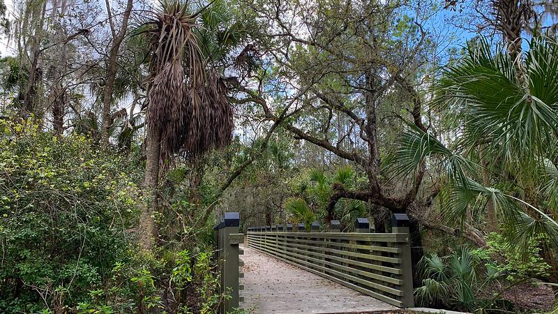 Wide boardwalk style bridge under the trees