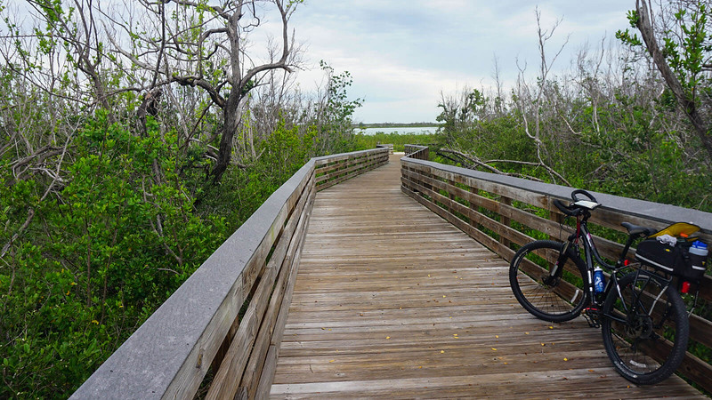 Boardwalk through mangroves