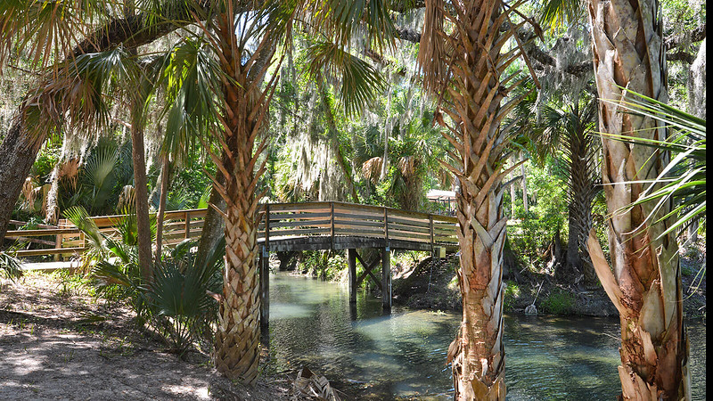 Palms with a bridge over a clear stream