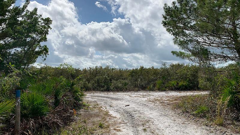 Trail junction at wall of scrub oak