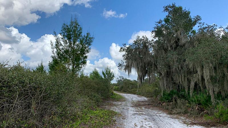 Oak along the trail