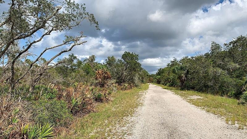 Gravel road through scrub habitat