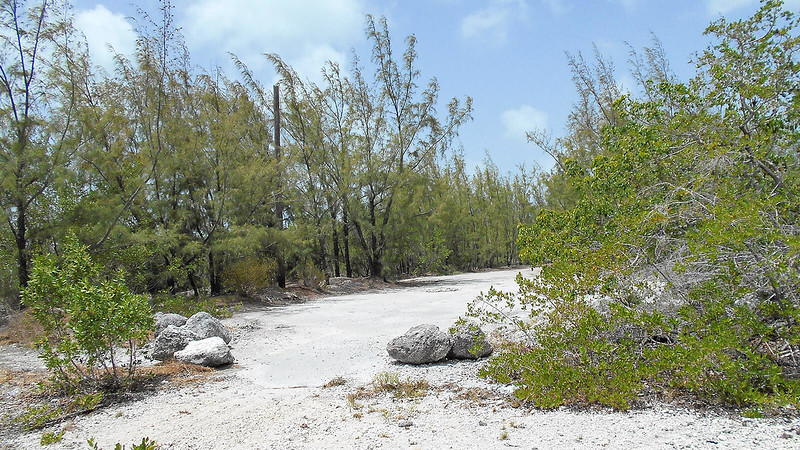 White ground boulders and trees